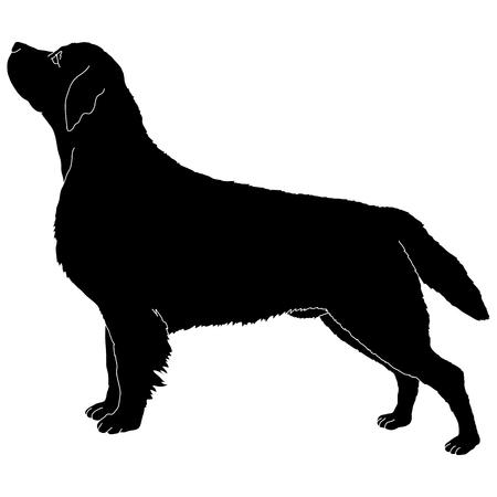 labrador: labrador dog silhouette Illustration