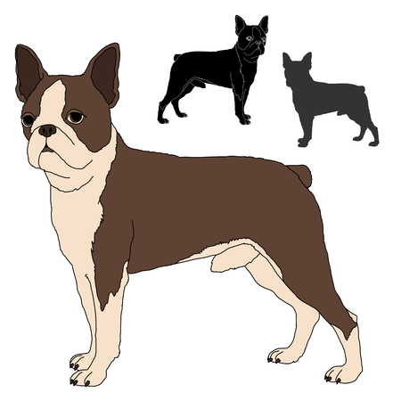 human eye close up: boston terrier vector illustration set Illustration