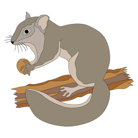 dormouse animal on the branch vector illustration of a realistic