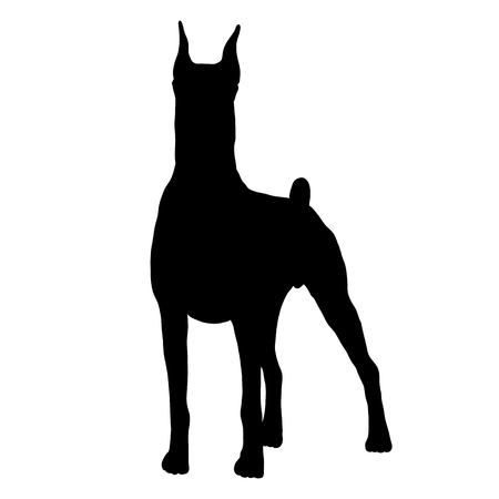 Doberman dog isolated realistic vector illustration black silhouette