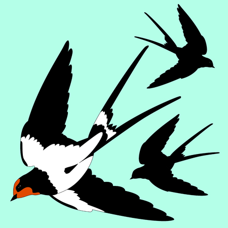 insectivorous: Swallow black silhouette Illustration