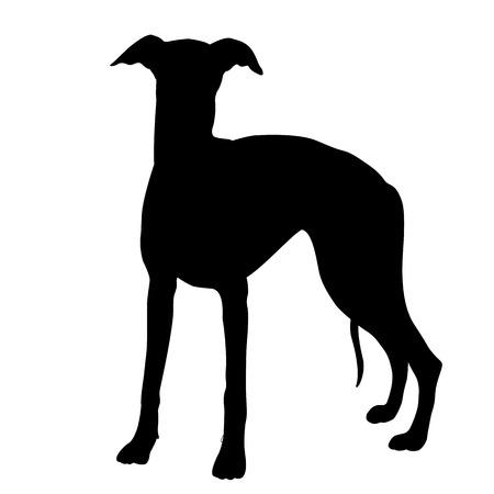 black: whippet dog black silhouette