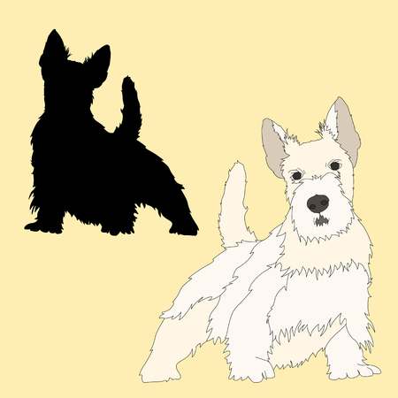 scottish terrier: Scottish Terrier dog black silhouette realistic Illustration