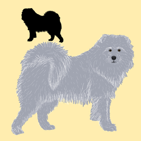 siberian samoyed: Siberian Samoyed dog black silhouette Illustration