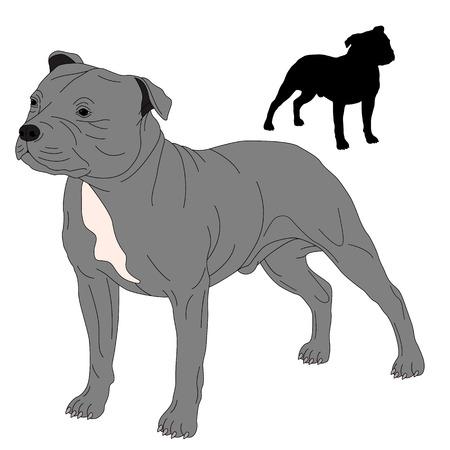 stocky: Staffordshire Bull Terrier dog silhouette