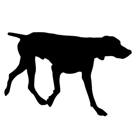 pointer dog: pointer dog black silhouette Illustration