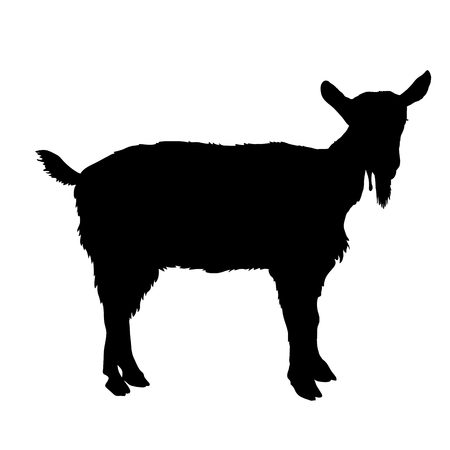 capra: young goat black silhouette