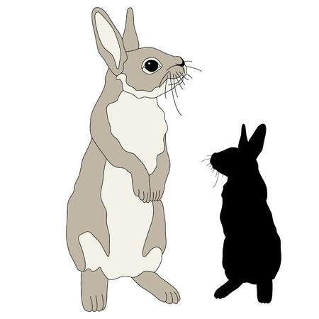 Bunny black silhouette is realistic illustration 向量圖像