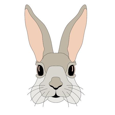 토끼 얼굴 현실적인 일러스트 레이션