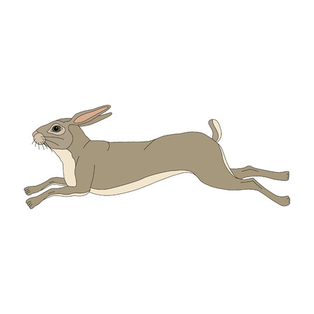 Wild hare running realistic color 向量圖像
