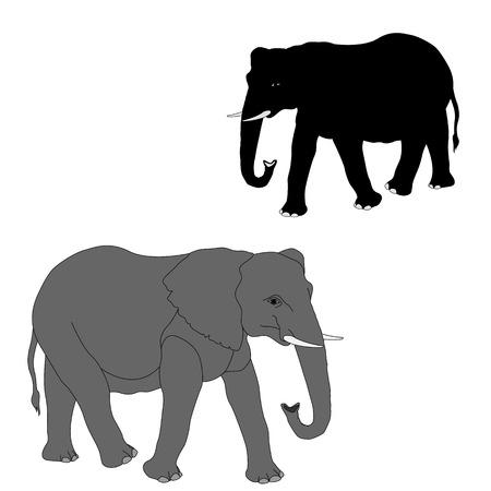 코끼리 성인 현실적인 실루엣 일러스트