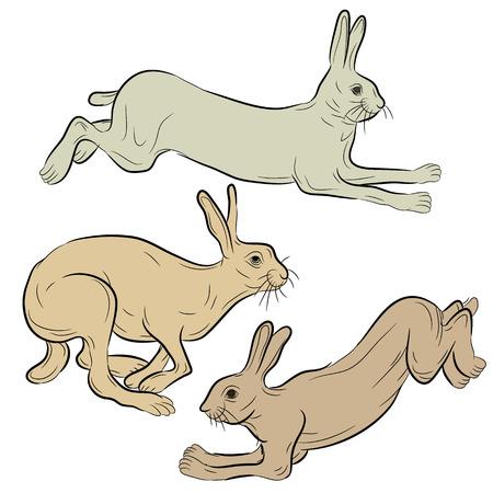 야생 토끼 실행 집합 일러스트