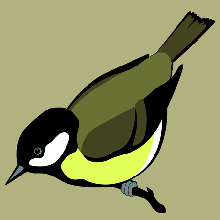 bird tit realistic color background 向量圖像