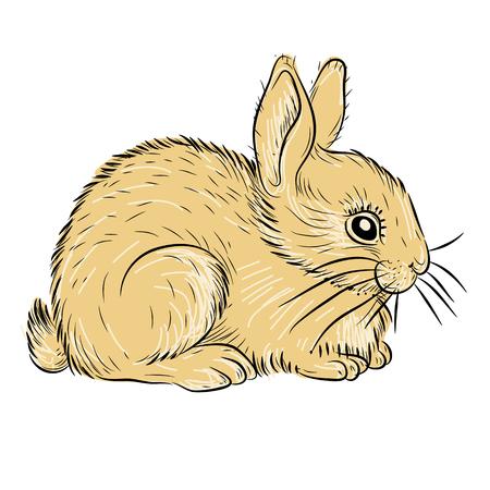 junge Kaninchen realistisch