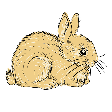 young rabbit realistic 向量圖像