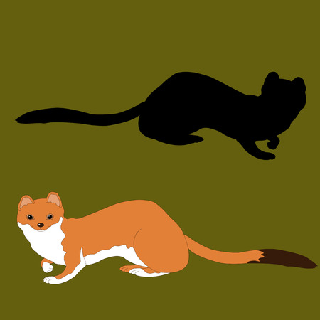 stoat: ermine summer face realistic silhouette