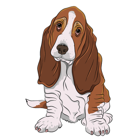 hound: basset hound puppy realistic Illustration