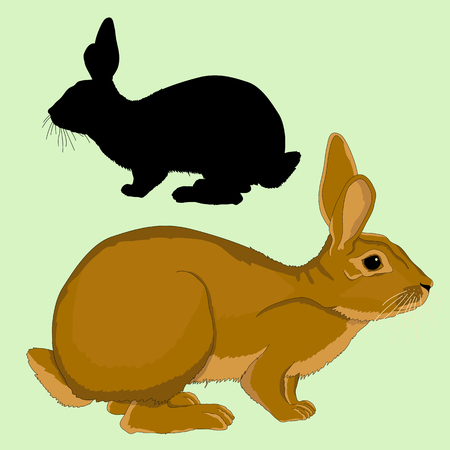 hare adult black silhouette realistic