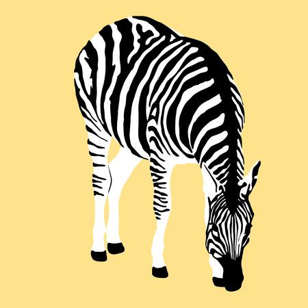 adult zebra realistic