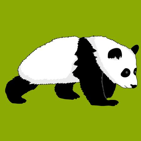 현실적인 팬더 곰