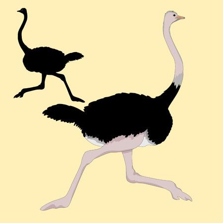 ostrich races realistic illustration black silhouette