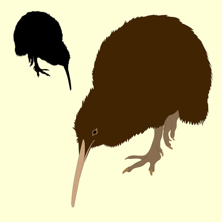 Kiwi bird silhouette black realistic