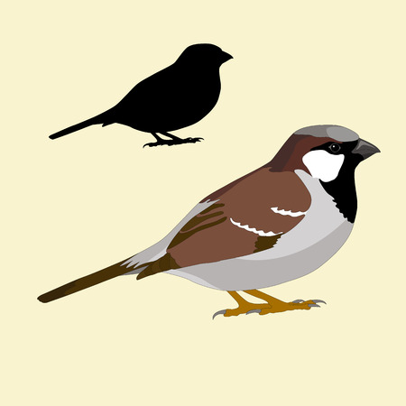 sparrow bird: Sparrow bird silhouette black realistic
