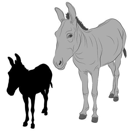 jackass: donkey black silhouette realistic gray