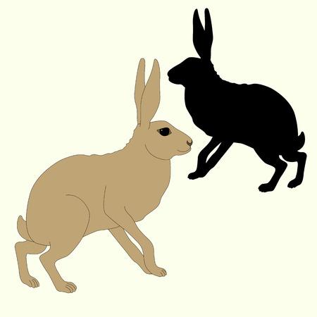 회색 토끼는 검은 실루엣을 앉는다.