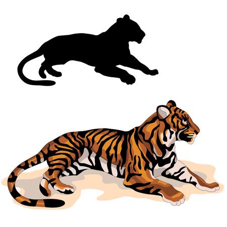 성인 호랑이 현실적인 검은 색 실루엣 그림입니다.