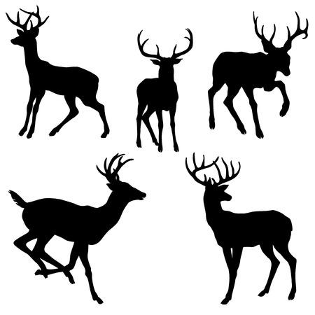 adult male deer silhouette black illustration set