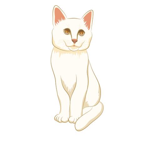 성인 흰색 고양이 앉아 일러스트