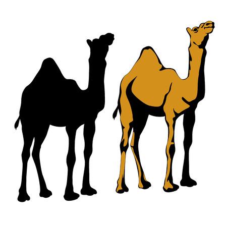 nomad: realistic camel silhouette black set Illustration