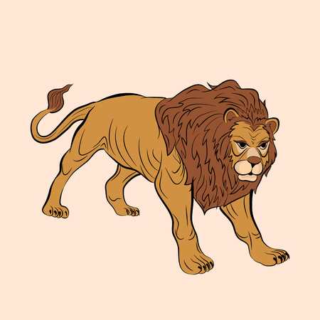 adult male lion realistic color 向量圖像