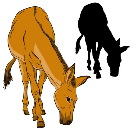 jackass: donkey black silhouette vector illustration realistic brown