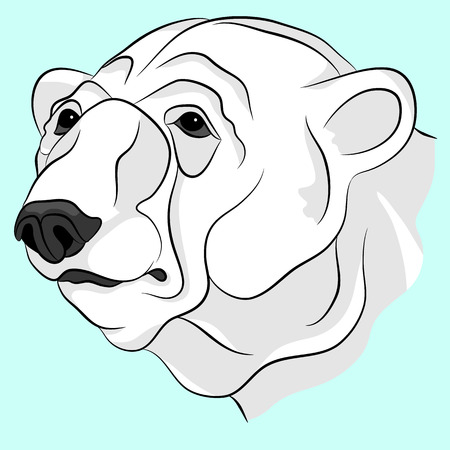 백인 성인 머리 얼굴 벡터 일러스트 레이션을 곰