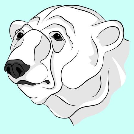 tundra: bear white adult head face vector illustration Illustration