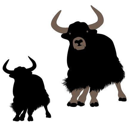 yak: musk ox mountain yak Mountain bull