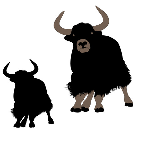 musk ox mountain yak Mountain bull