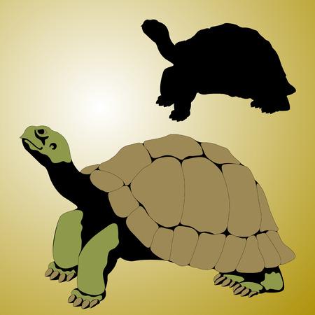 old tortoise realistic vector illustration black silhouette set 向量圖像