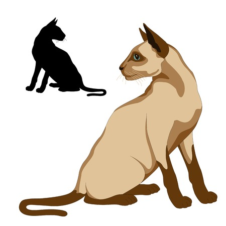 siamese cat: Siamese cat sits realistic set Illustration