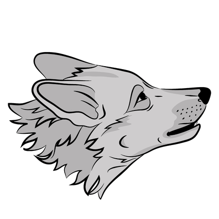adult wolf head face realistic