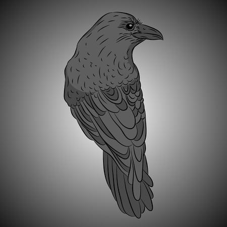 bird crow black gray realistic