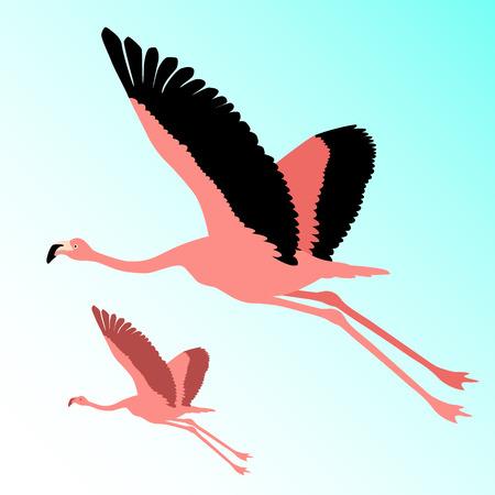 Pink flamingo bird flying