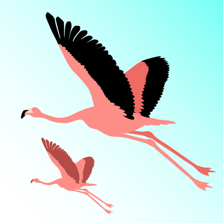 Pink flamingo bird flying