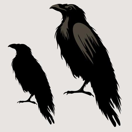 silueta del pájaro cuervo negro