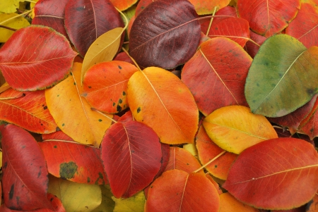 Beautiful Fall foliage in a colorful arrangement