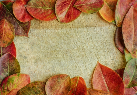 aspen leaf: Autumn leaves on a wooden background with copy space