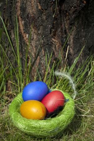 Easter eggs Stock Photo - 17833822