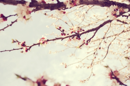 Spring blossoms Stock Photo - 19115730